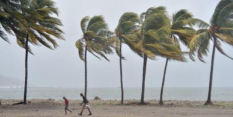 Tree, Palm tree, Arecales, Beach, Woody plant, Plant, Tropics, Attalea speciosa, Wind, Vacation,