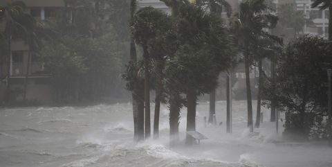 Atmospheric phenomenon, Water, Tropical cyclone, Rain, Tree, Drizzle, Mist, Winter storm, Fog, Storm,