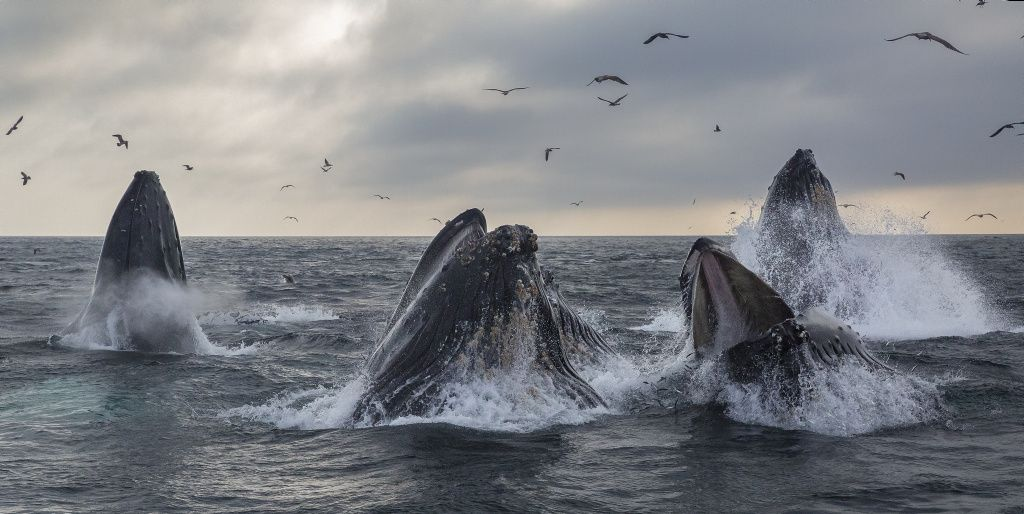 Las heces de los gatos están haciendo enfermar a las ballenas