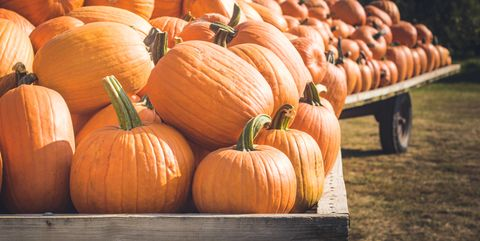 wagons loaded with pumpkins
