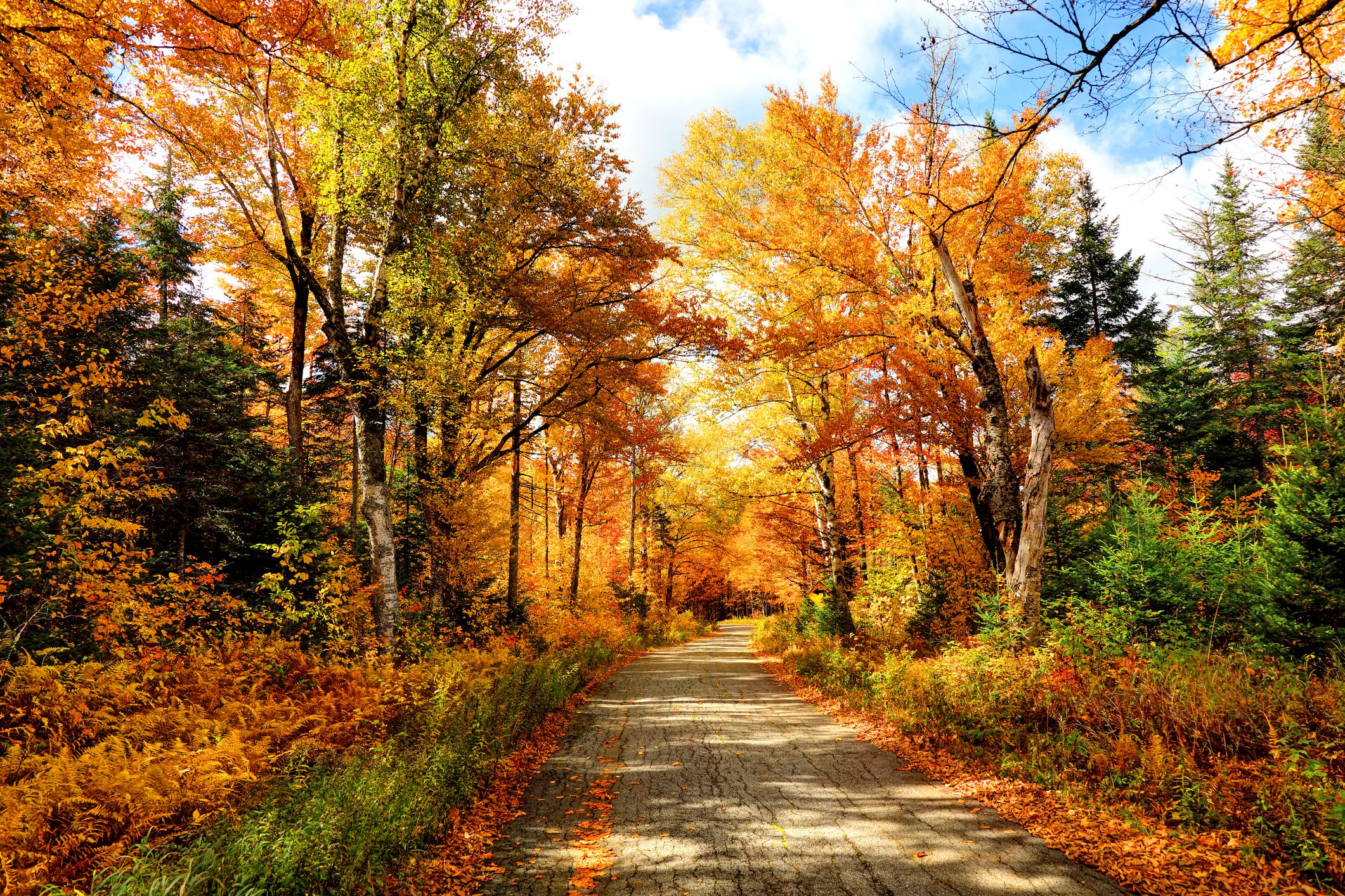 Experts From The Weather Channel Say This Year's Fall Foliage Season Will Be Delayed