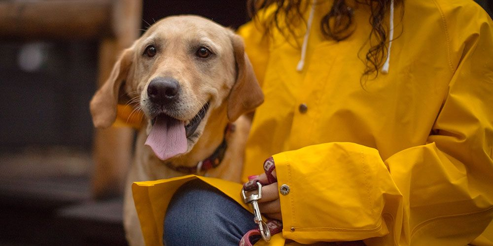 This university has introduced dog walking sessions to help students de-stress