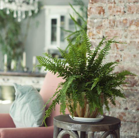 Flowerpot, Houseplant, Green, Plant, Room, Living room, Tree, Leaf, Flower, Wall,