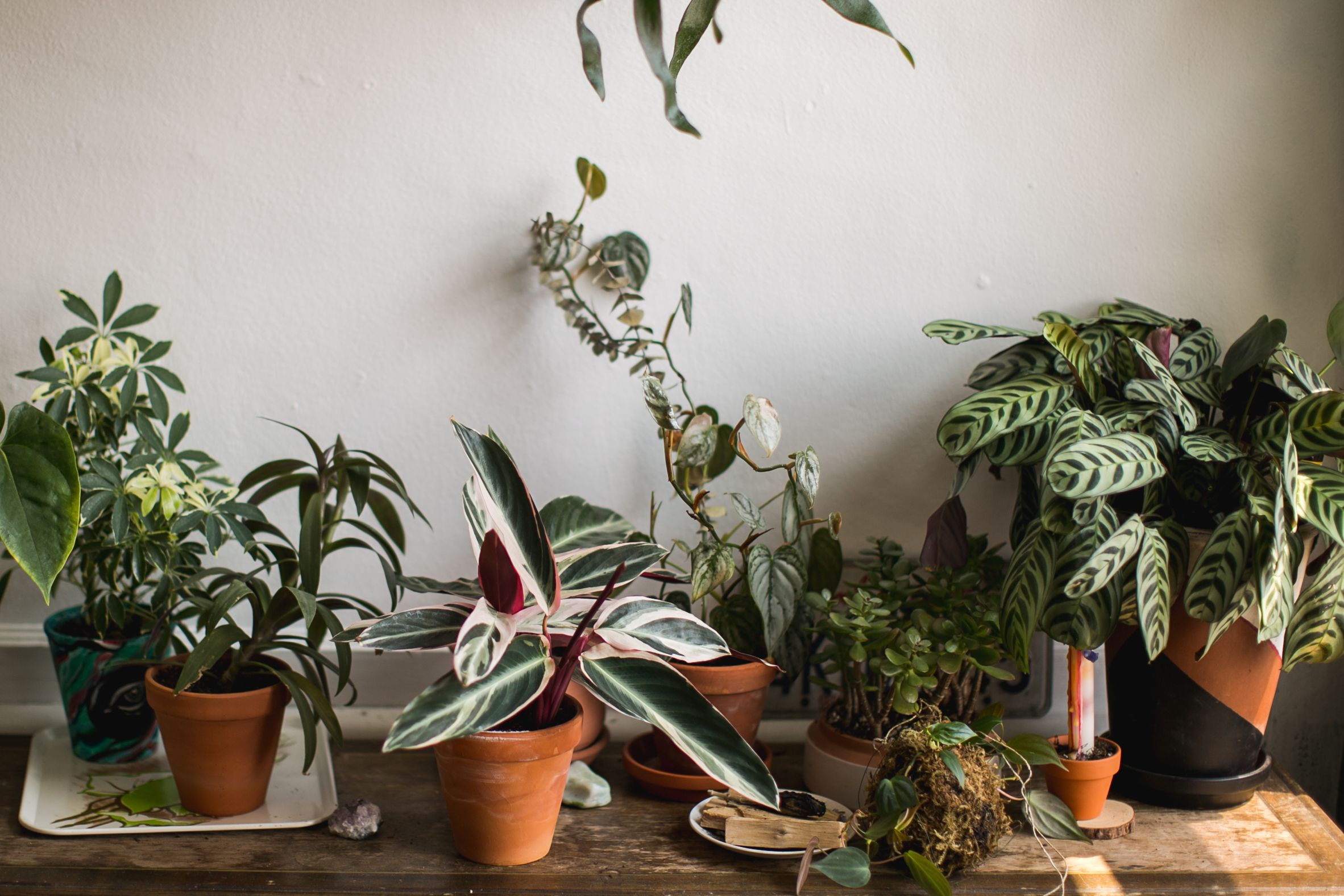 These Are the Most Popular Houseplants in Each State