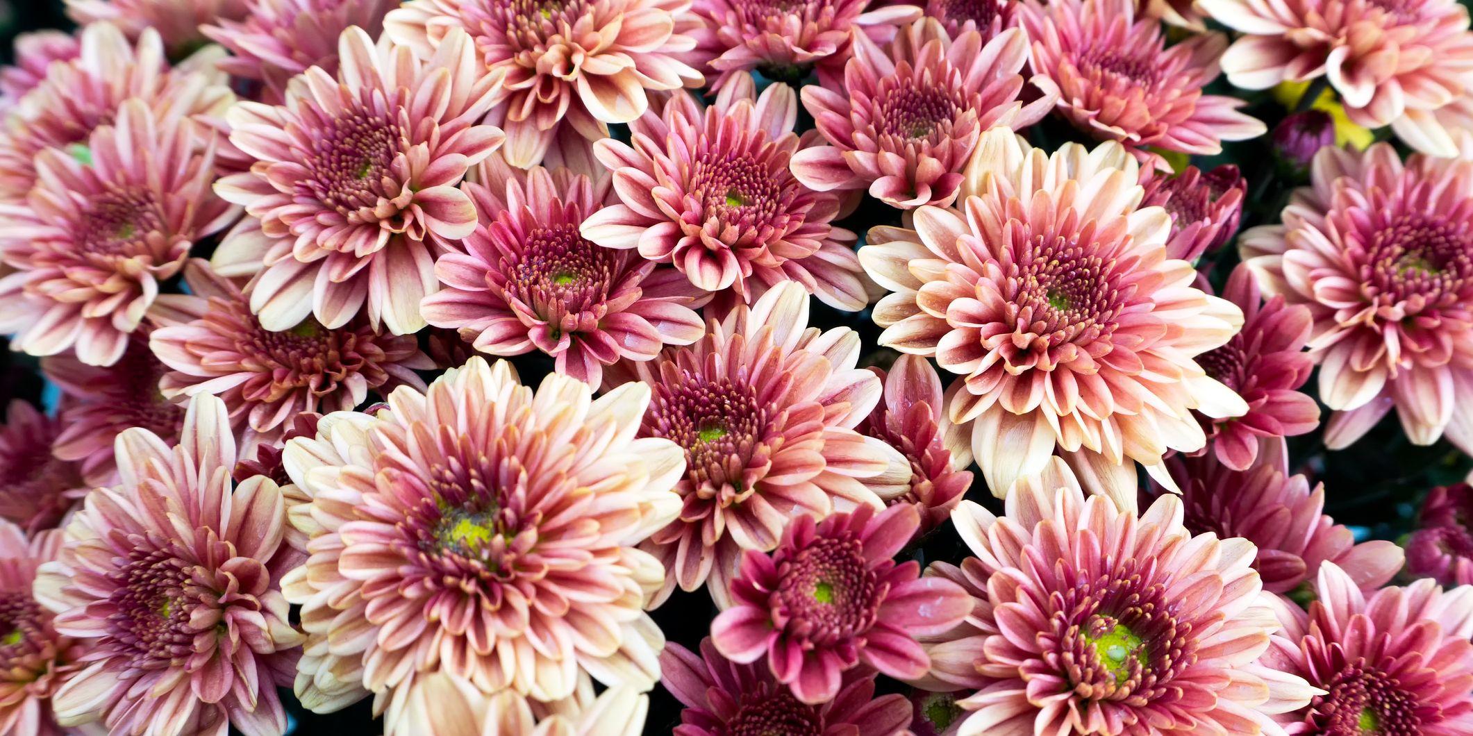 In ELLE Bloemen zie je hoe beautylooks geïnspireerd op bloemen
