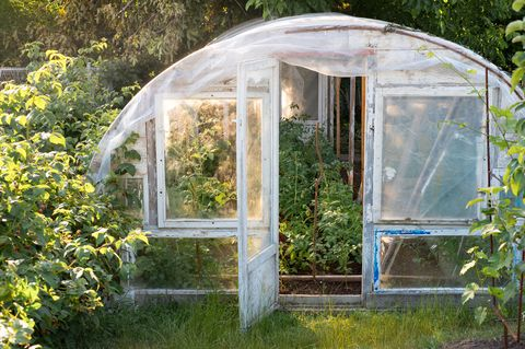 Greenhouse, House, Botany, Garden, Architecture, Outdoor structure, Plant, Building, Plant community, Tree,