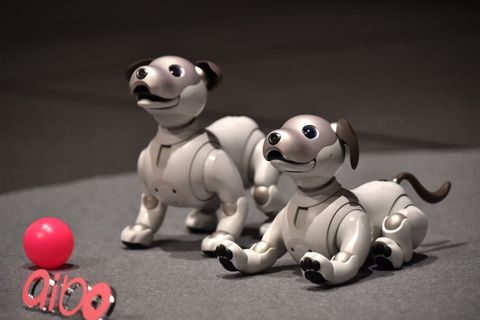 Sony S Adorable Robot Dog Is Back And Expensive