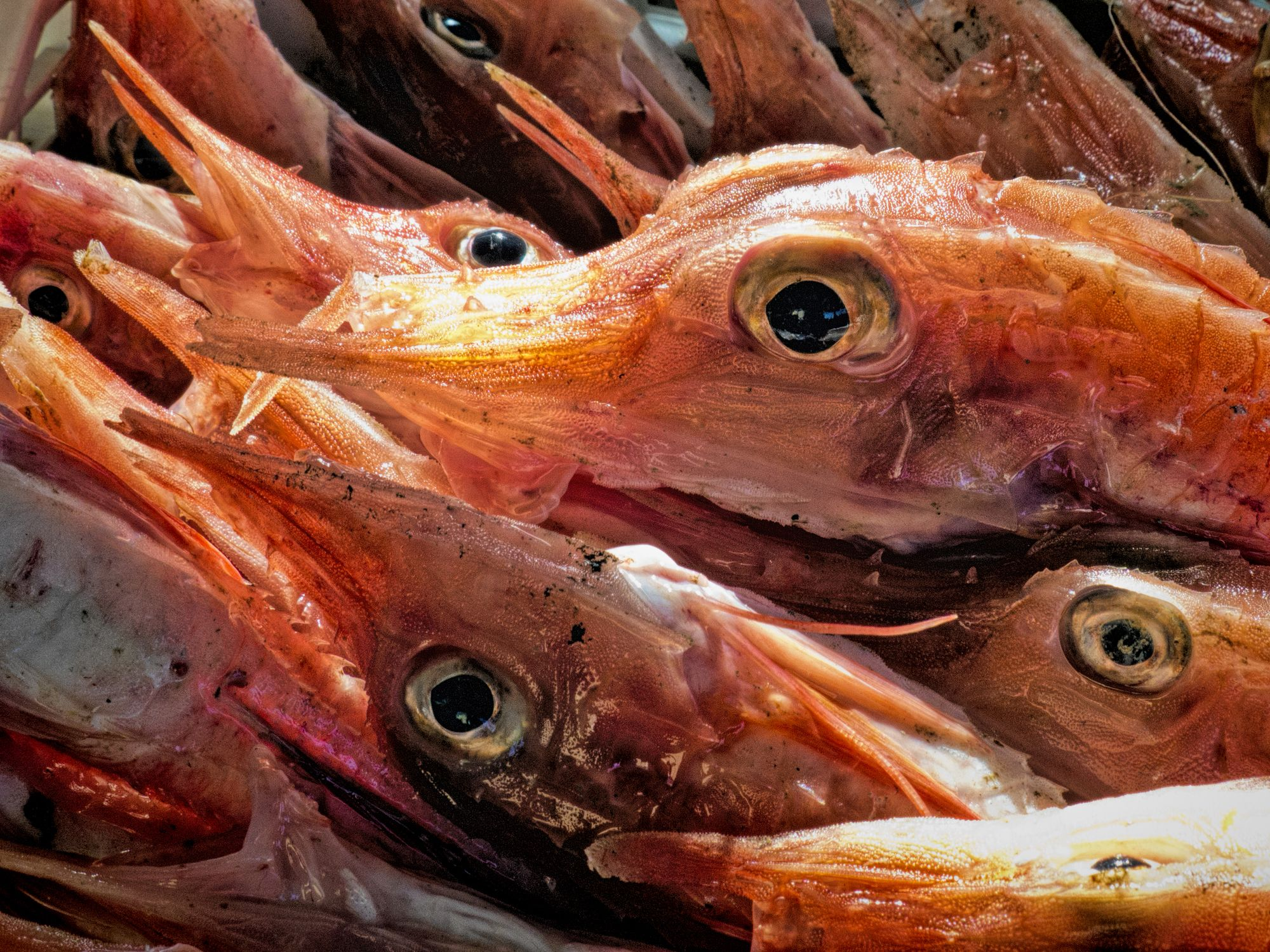 I trucchi per comprare il pesce fresco, svelati da chi lo vende