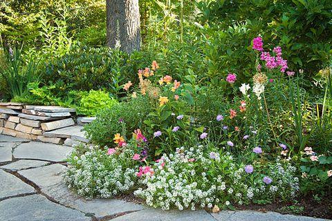 annuals vs perennials