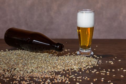 Glass of beer on the table, with wheat malt and barley