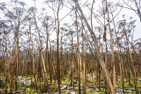 Tree, Natural environment, Forest, Nature reserve, Northern hardwood forest, Woodland, Vegetation, Plant, Woody plant, Natural landscape,