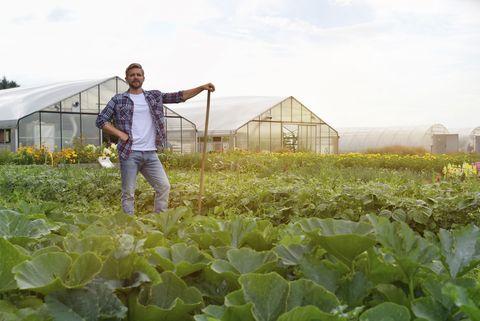 Farm, Farmworker, Field, Crop, Cash crop, Agriculture, Plantation, Plant, Farmer, Rural area,
