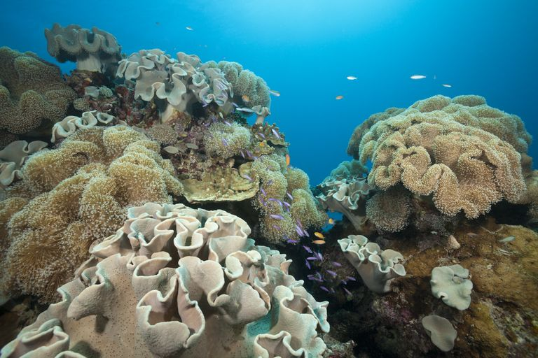 Could CRISPR Be the Key to Saving Coral?