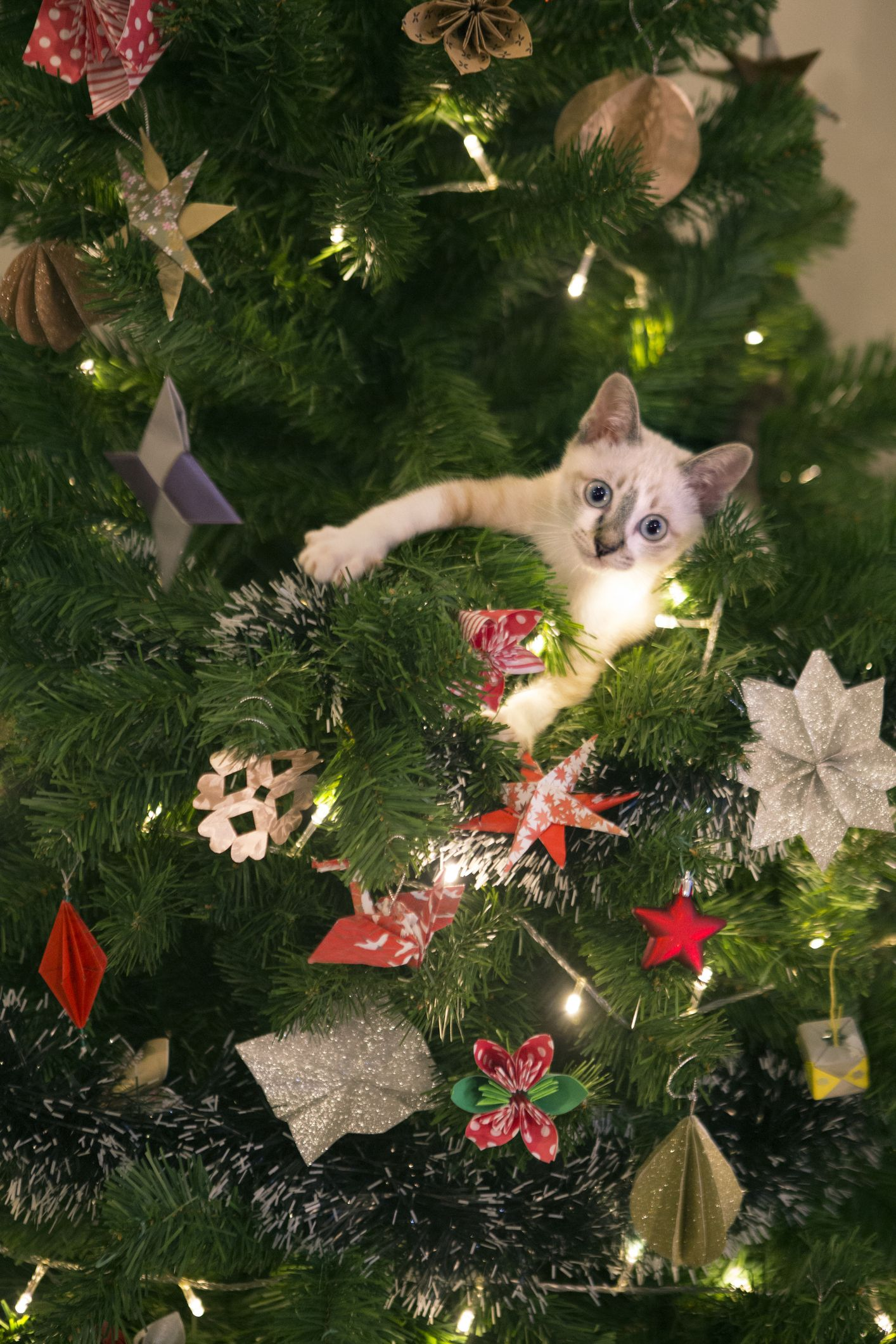 Owners share hilarious pictures of their cats half way up their Christmas trees
