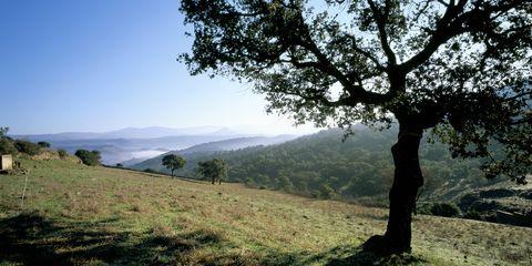 Natural landscape, Nature, Tree, Mountainous landforms, Hill station, Sky, Hill, Vegetation, Mountain, Atmospheric phenomenon,