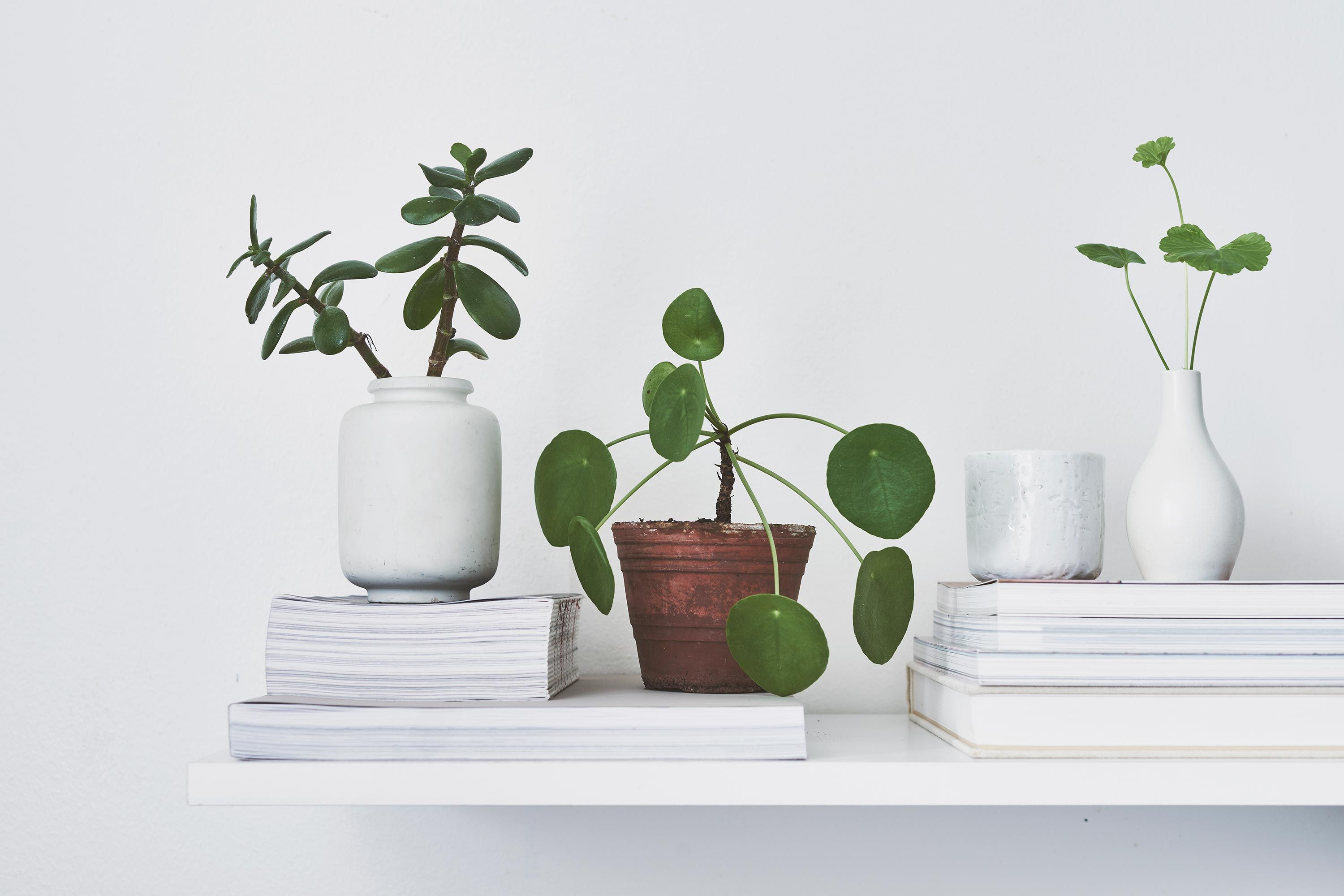 The 10 Most Instagrammable House Plants Revealed