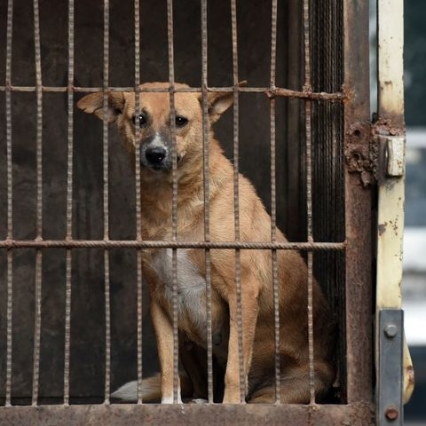 Mammal, Animal shelter, Street dog, Canidae, Dog, Dog breed, Aspin, Snout, Kennel, Carnivore,