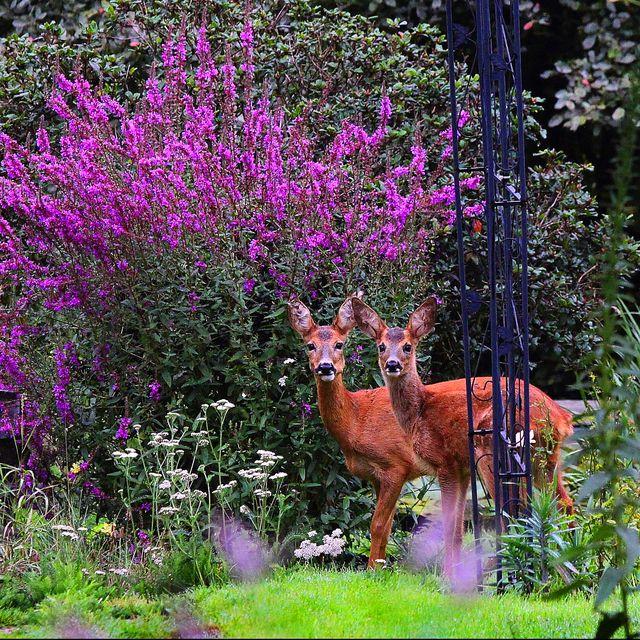 Best Deer Resistant Plants