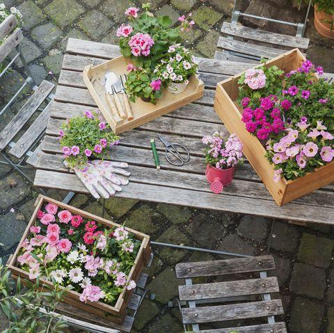 Flower, Plant, Garden, Wood, Yard, Annual plant, Herb, Groundcover, Flowerpot, Impatiens,