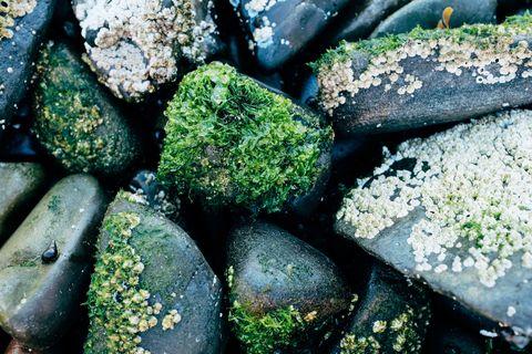 Rock, Pebble, Non-vascular land plant, Plant, Organism, Moss, Green algae, Mineral,