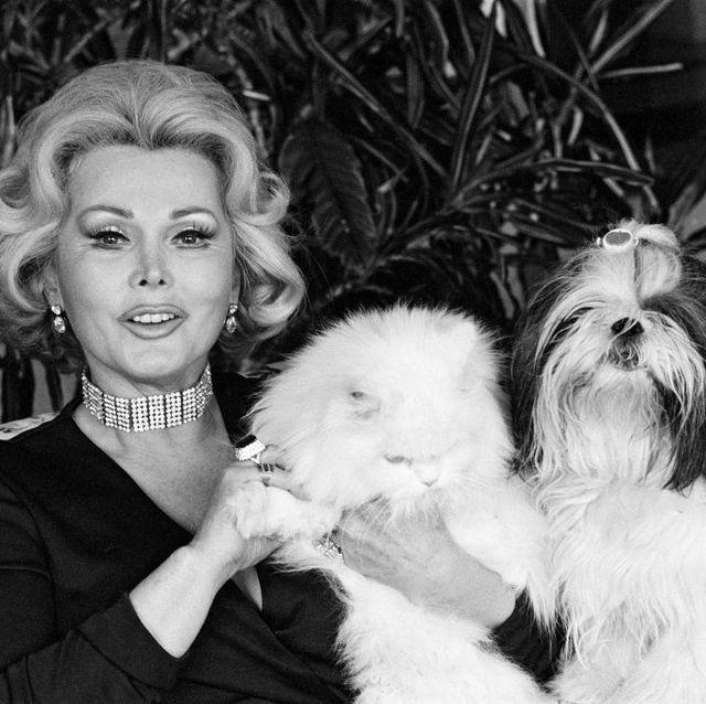 Dog, Canidae, Shih tzu, Dog breed, Companion dog, Chinese imperial dog, Löwchen, Fur, Maltepoo, Carnivore,