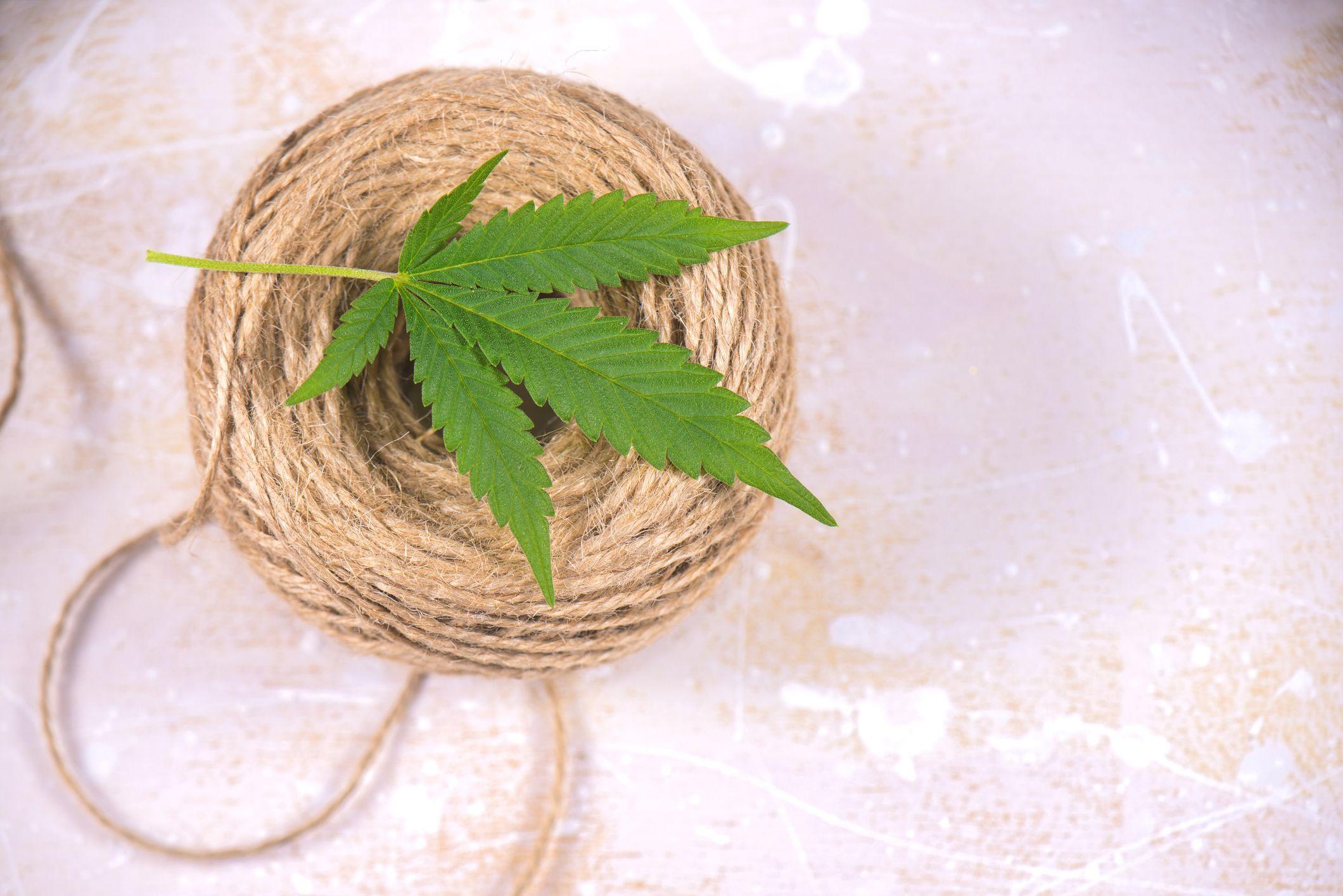 hemp, marijuana, weed, recovery