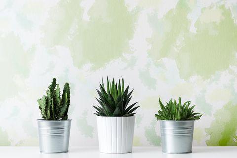 succulents, plants