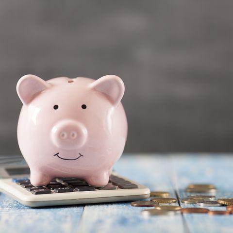 Piggy bank, Saving, Domestic pig, Snout, Money handling, Suidae, Animal figure,