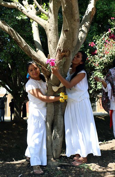 marry-trees-mexico-activism
