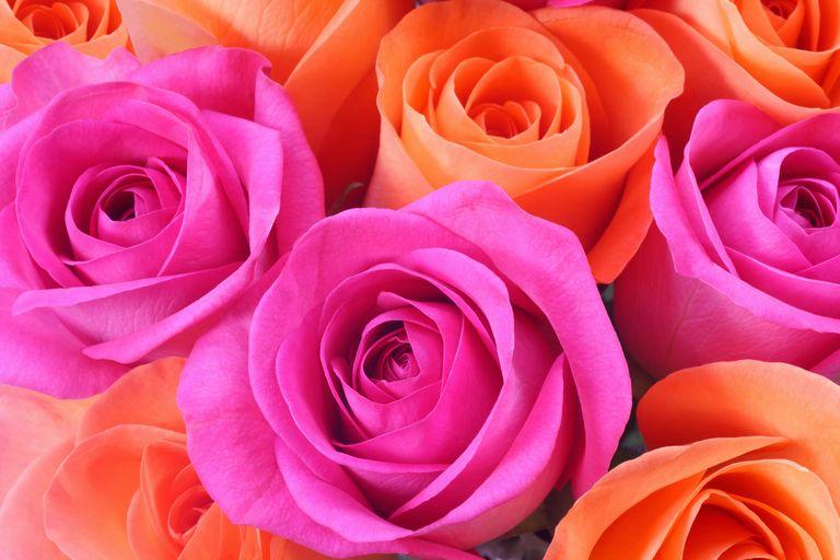 Bridesmaids Orange & Pink Silk Rose Wedding Posy - Sarah's ...   Orange And Pink Roses
