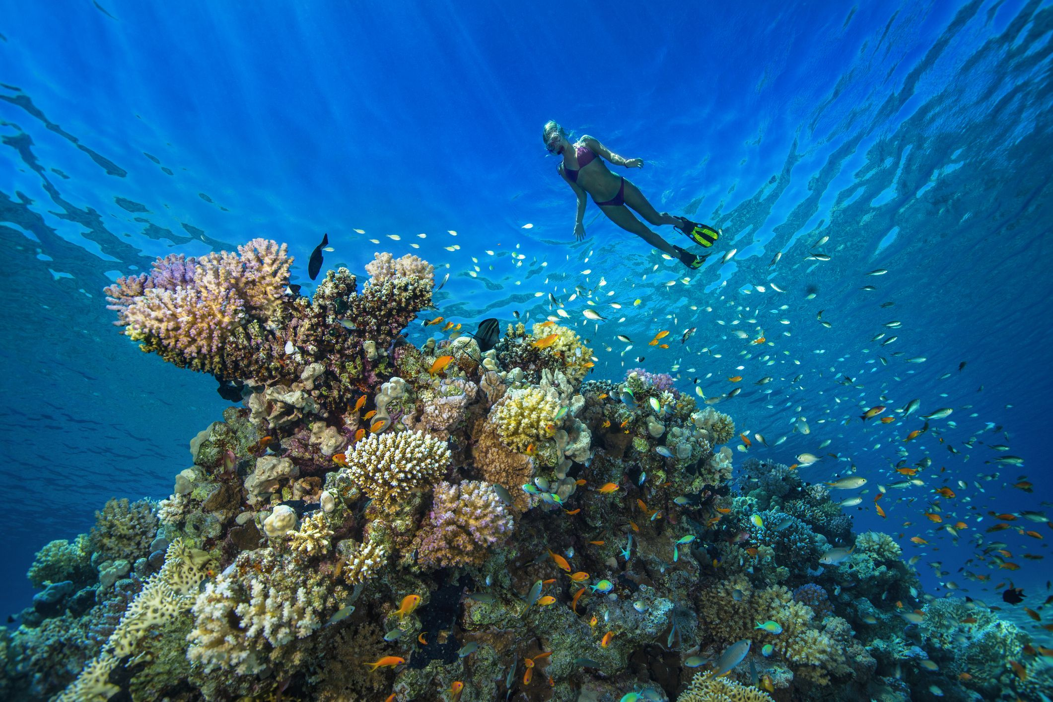 These Luxury Resorts Are Helping Save Coral Reefs