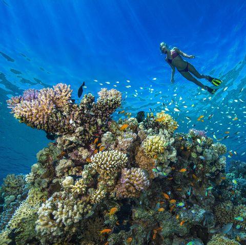 Coral Reef Snorkeling