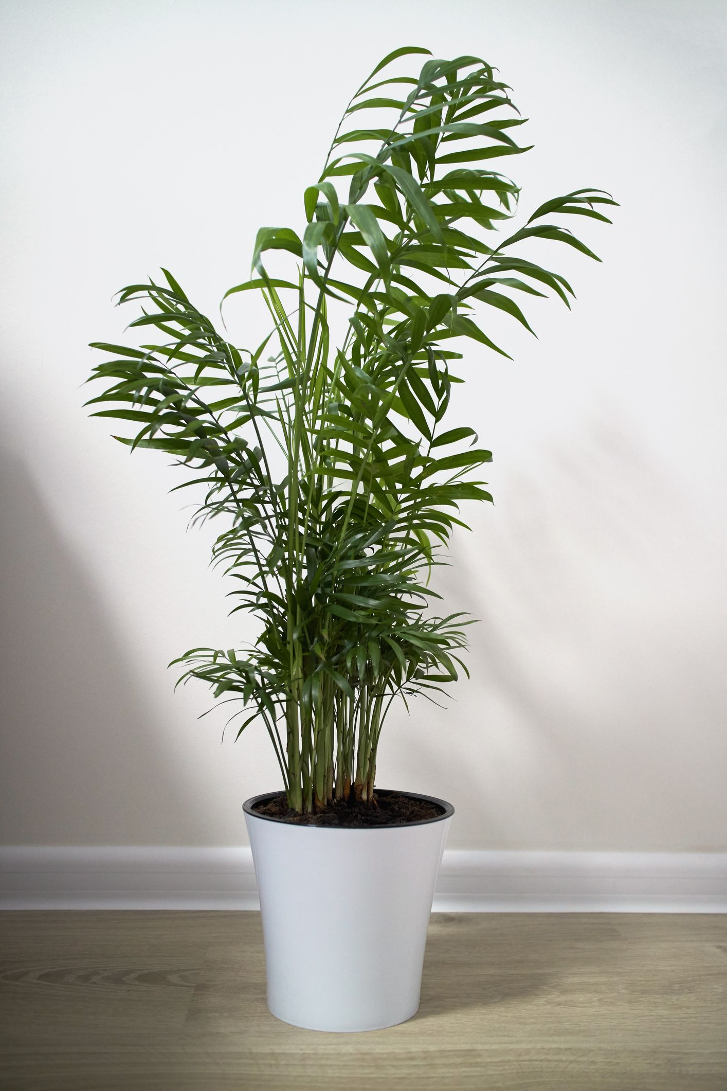 Indoor home office plants royalty Homegram Image Pinterest 12 Houseplants That Can Survive Low Light Best Indoor Low Light Plants