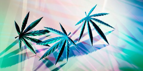 Blue, Purple, Leaf, Graphic design, Plant, Pattern, Palm tree, Arecales, Hemp family, Graphics,