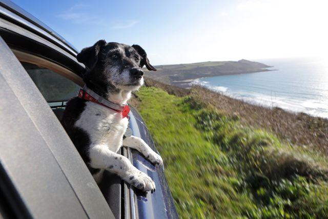 dog friendly road trips