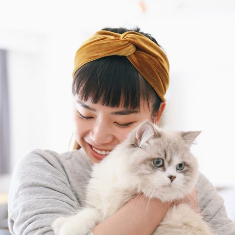 crazy cat lady research study