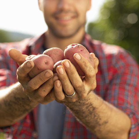 Hands holding potatoes