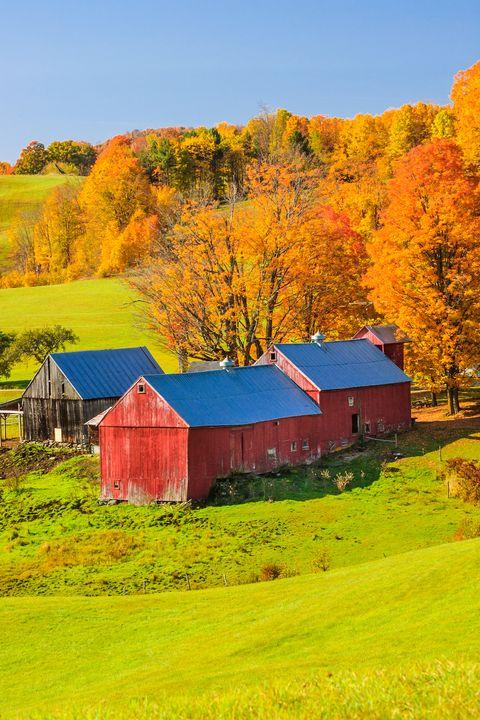 Nature, Leaf, Natural landscape, Barn, Farm, Tree, Rural area, Yellow, Grassland, Sky,