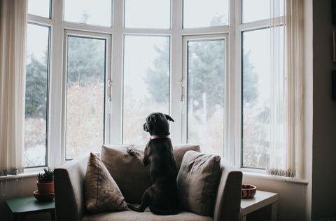 Mascota esperando.