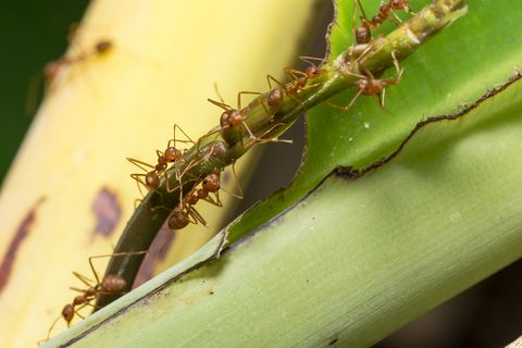 Close-Up Of Ants On Plant
