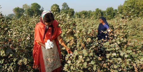 Adaptation, Farmworker, Plant, Plantation, Crop, Agriculture, Farm,