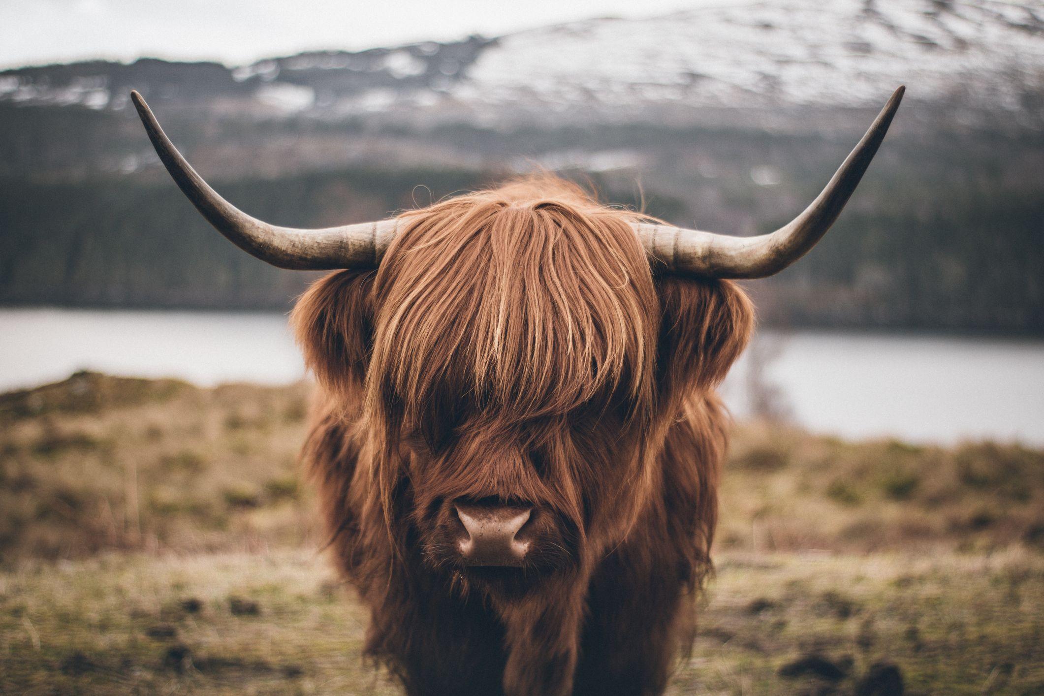 L'autunno è il momento ideale per una vacanza on the road nelle Highland scozzesi