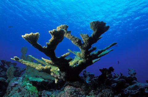 coral reef atlas map