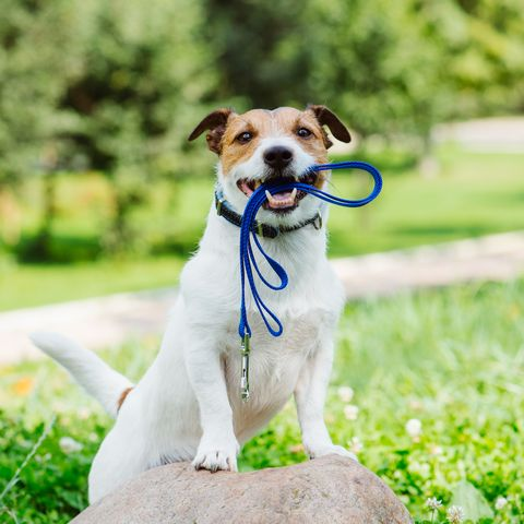 dog owners healthy fit