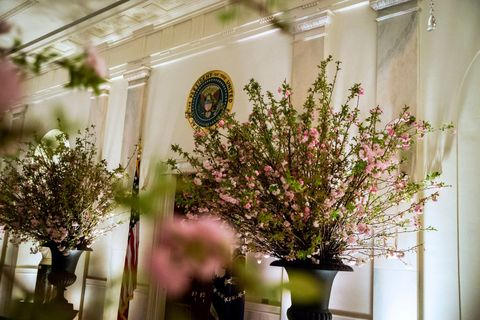 Donald trump first state dinner white house state dinner with france the cross hall of the white house which now features 1200 branches of cherry blossoms is shown the night before the first state dinner of the trump mightylinksfo