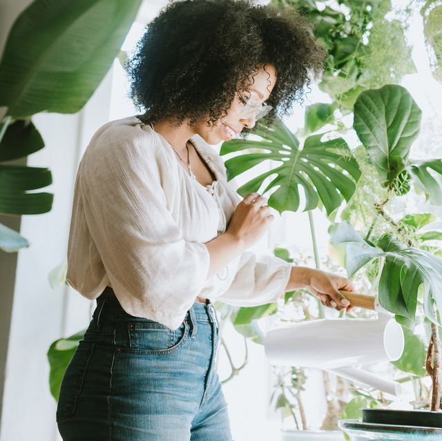10 Air-Purifying Plants That Create a Healthier Home