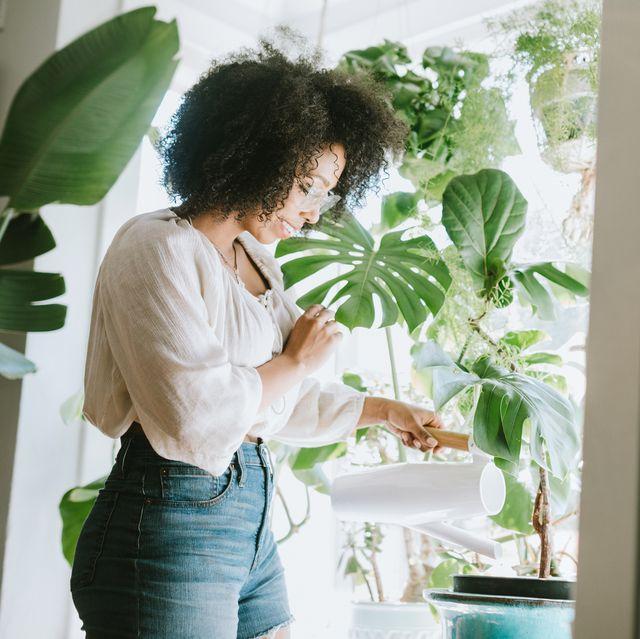 white, photograph, houseplant, green, botany, plant, room, home, interior design, design,