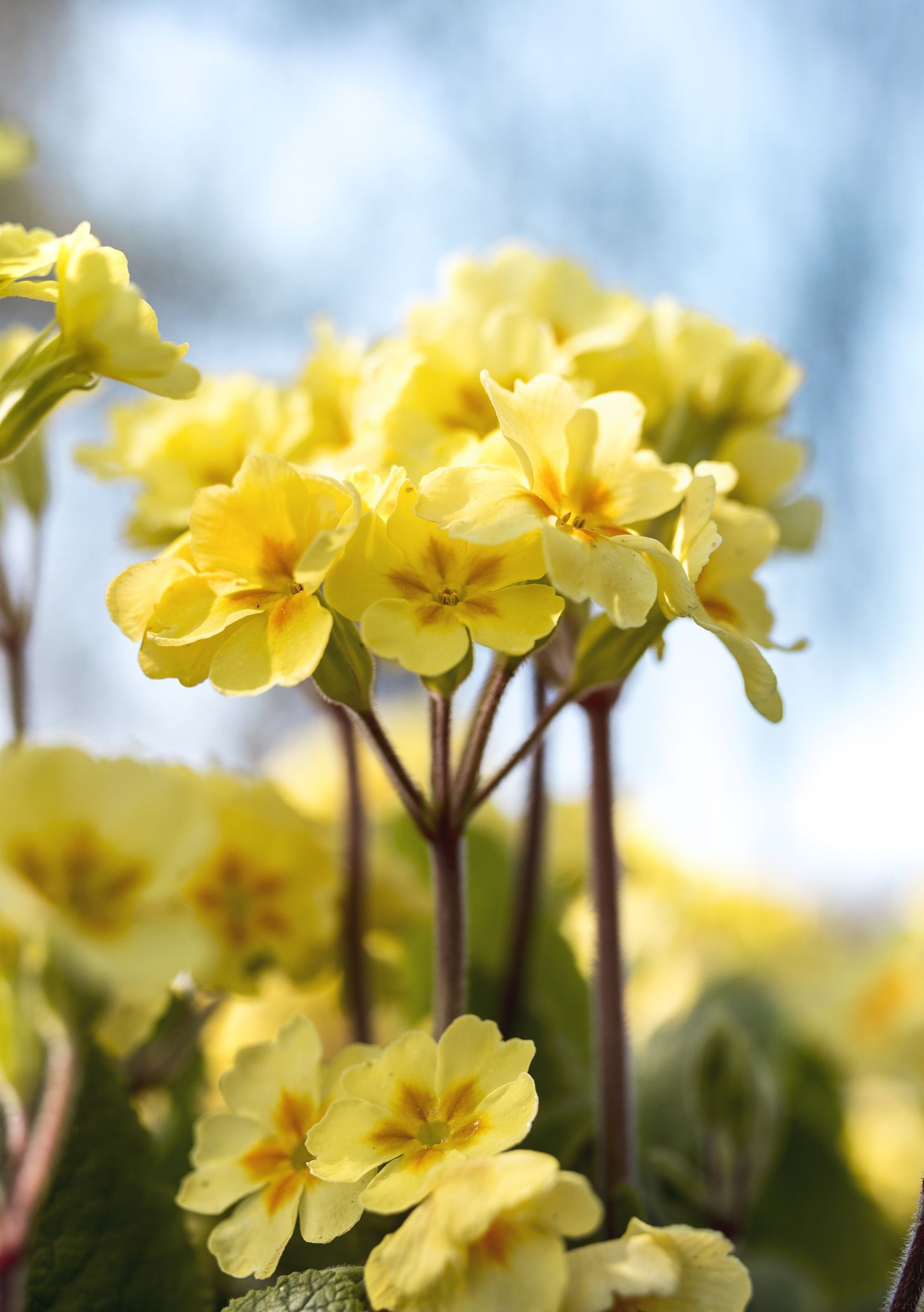 15 Best Plants That Bloom In Winter Flowers That Develop In The Cold