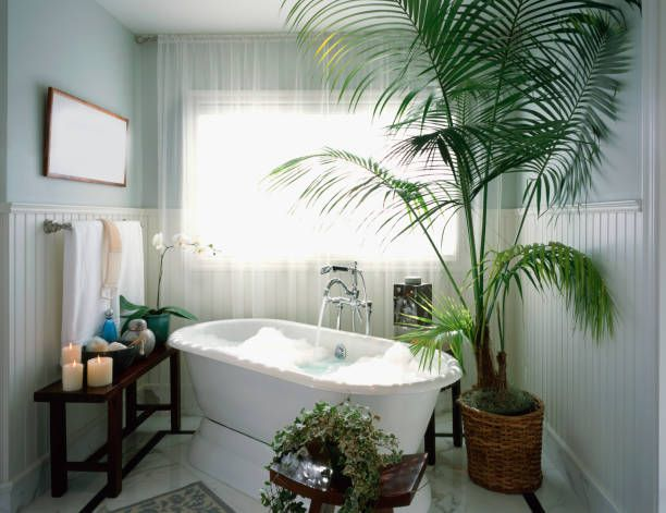 15 Best Bathroom Plants Best Plants For Showers And Bathrooms