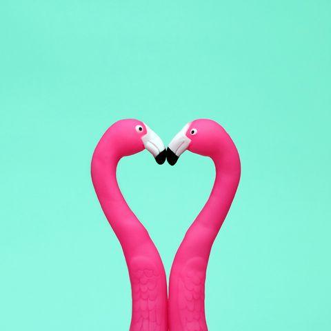 Pink, Bird, Water bird, Greater flamingo, Love, Heart, Flamingo, Organism, Font, Magenta,
